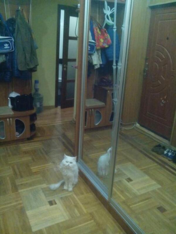 3 комнатная квартира, Харьков, Салтовка, Владислава Зубенко (Тимуровцев) (437221 9)