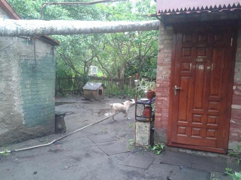 Дом, Солоницевка, Харьковская область (357360 4)