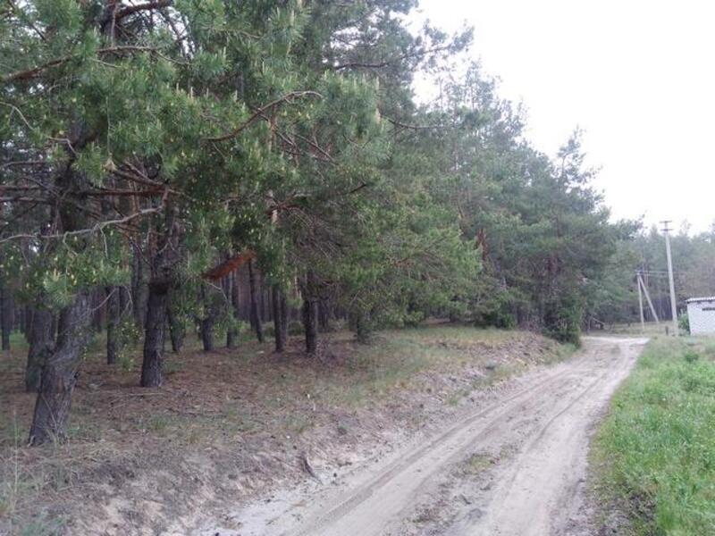 Дом, Терновая, Харьковская область (384423 5)