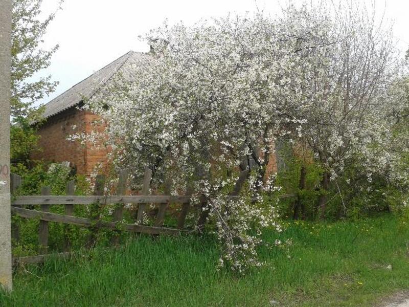 Дом, Введенка, Харьковская область (392611 4)