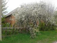 Дом, Малиновка, Харьковская область (392611 4)