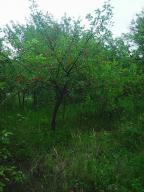 Дача, Липцы, Харьковская область (403466 3)