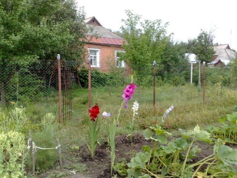 дом, Вильча, Харьковская область (456723 4)