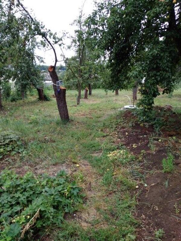 дом, Борисовка, Харьковская область (469040 7)