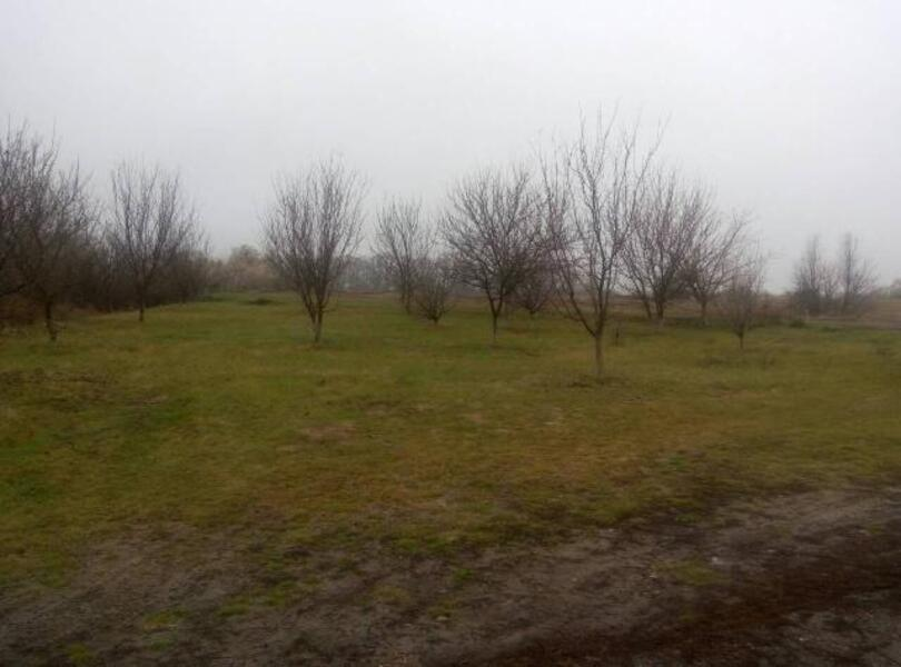 Дом, Коробочкино, Харьковская область (497882 4)