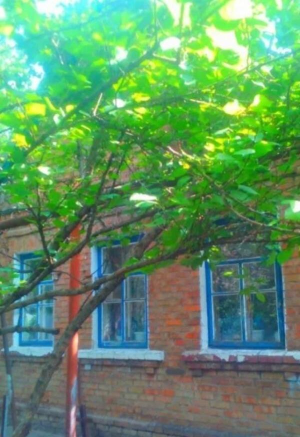 Дом, Казачья Лопань, Харьковская область (572772 1)