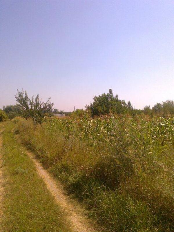 участок 15 сот., Безруки, Харьковская область (296869 2)