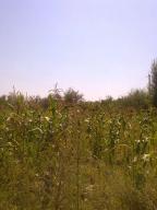 Купить земельный участок в Харькове (296869 1)