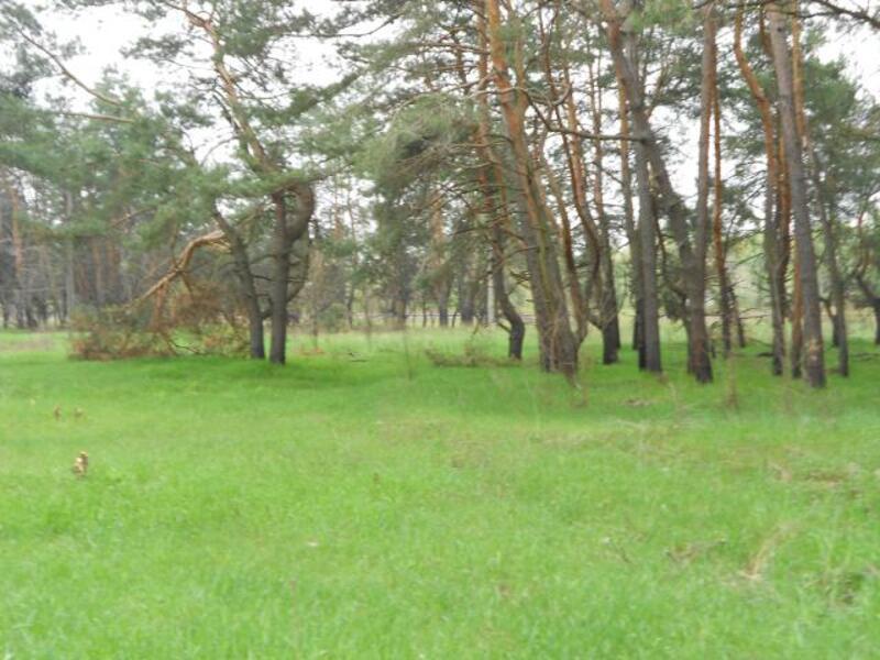 участок 25 сот., Подворки, Харьковская область (331358 5)