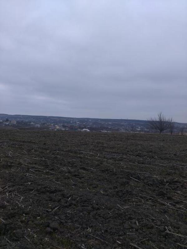 участок 12 сот., Черкасская Лозовая, Харьковская область (384366 2)