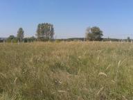 участок 25 сот., Черкасские Тишки, Харьковская область (416523 1)