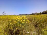 Купить земельный участок в Харькове (473501 2)