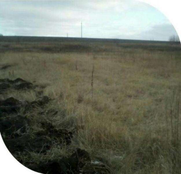 участок 25 сот., Зарожное, Харьковская область (509832 1)