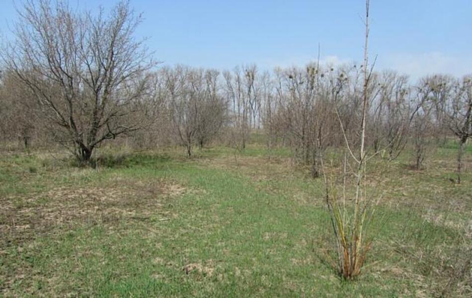 участок 15 сот., Слатино, Харьковская область (56131 1)