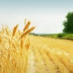 Государственный аграрный реестр начинает работать в 6 областях
