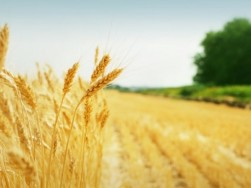 Государственный аграрный реестр