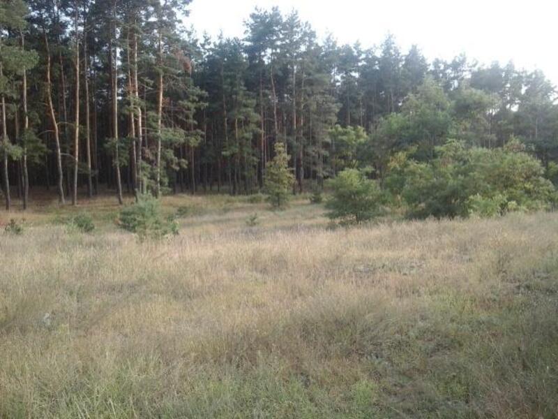 участок, Харьковская область, Змиевской район, Коропово, Змиевское направление (40822 2)